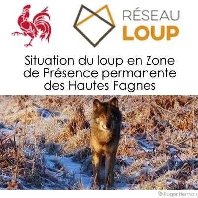 Situation du loup en Zone de Présence permanente des Hautes Fagnes – 16/09/2021