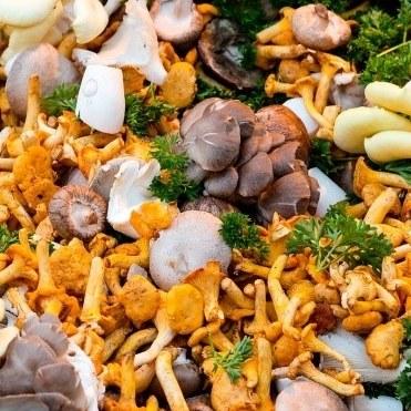 Avis aux champignonneurs et autres mycophiles